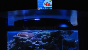 Digital Signage at Oceanworld Manly Australia